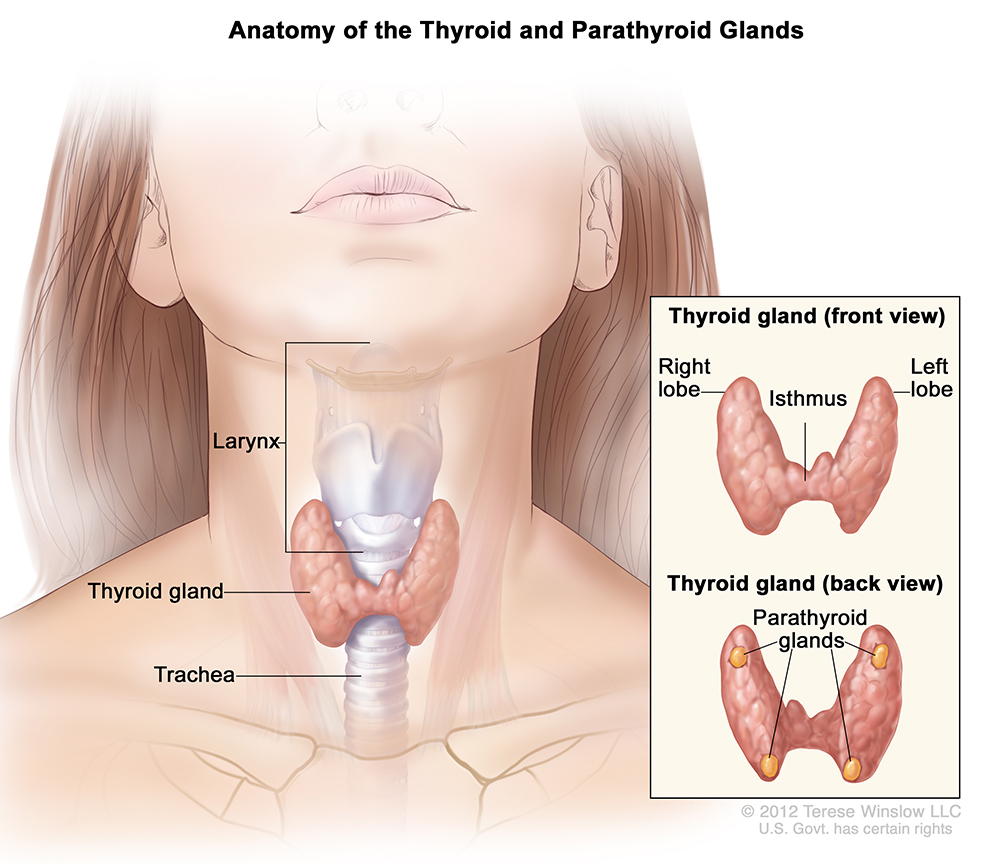 hpv and papillary thyroid cancer que es a cancer