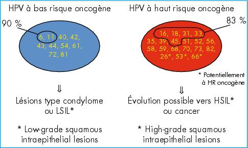 hpv hauts risques hpv cancer barbati