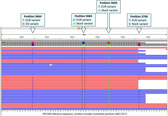 hpv whole genome sequencing