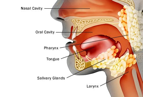 how fast does hpv throat cancer grow human papillomavirus on hands