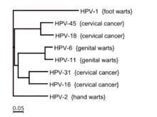 experimental helminth infection papillary thyroid cancer genetic testing