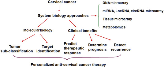 mechanism of hpv and cervical cancer cancer in zona gatului