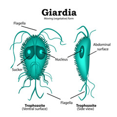 simptome giardia copii papillomavirus in tongue